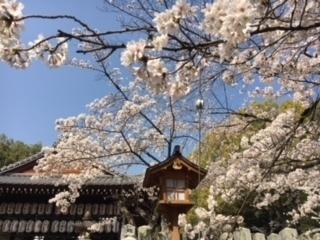 3.29桜�A.jpeg