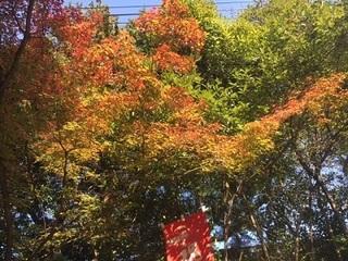 11.17紅葉.jpg