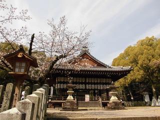 3.26桜�A.JPG