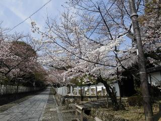 3.26桜�B.JPG