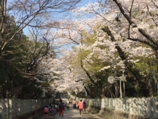 3.29桜.jpeg