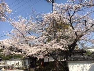 3.29桜�B.jpeg
