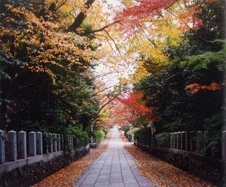 向日神社の紅葉.jpg